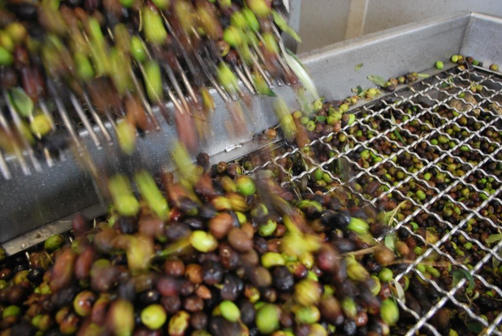 olive-lavorazione